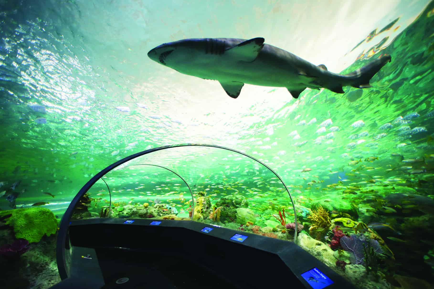 Ripley's Aquarium brings the ocean downtown