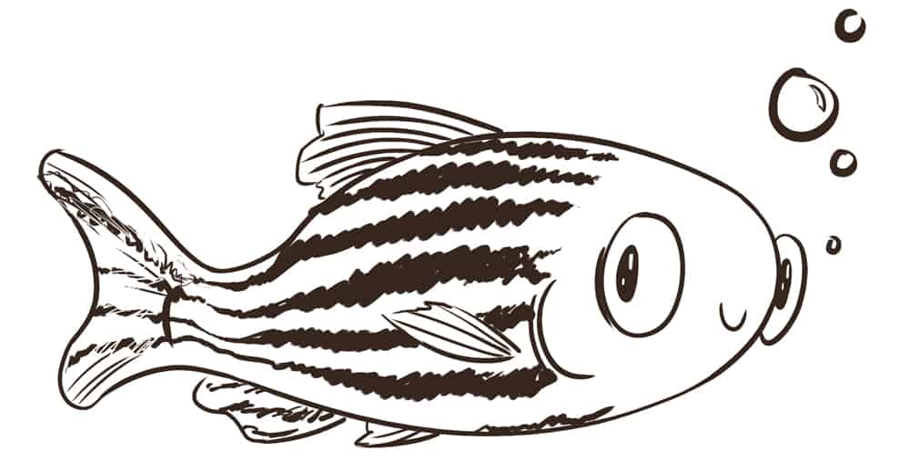The marvelous zebrafish