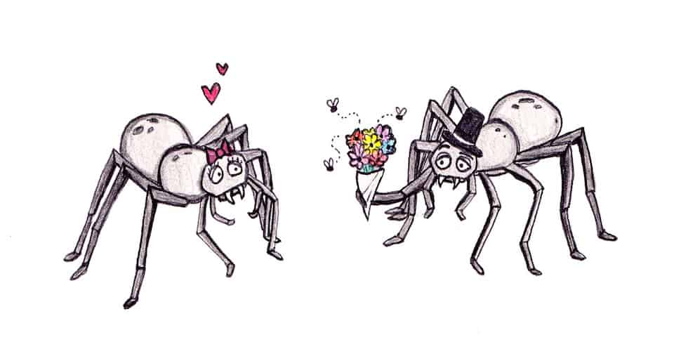 Relationship tips…from spiders